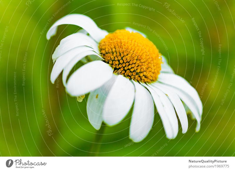 Nature Plant Summer Colour Beautiful Green White Landscape Flower Relaxation Calm Environment Life Yellow Blossom Love