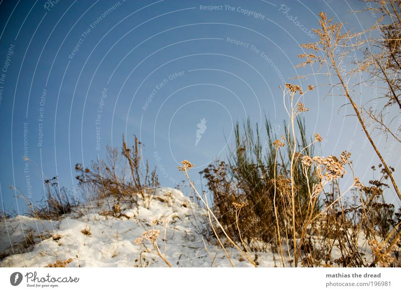 dried flowers Environment Nature Landscape Plant Air Sky Cloudless sky Horizon Winter Weather Beautiful weather Ice Frost Snow Tree Flower Grass Bushes Leaf