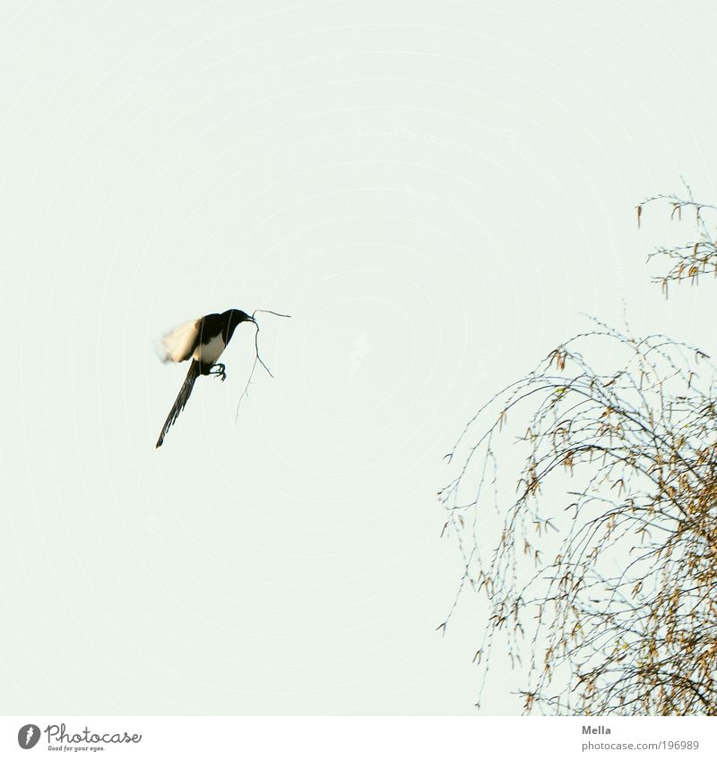 Nature Sky Tree Plant Animal Work and employment Movement Spring Air Moody Bird Environment Flying Free Future Natural