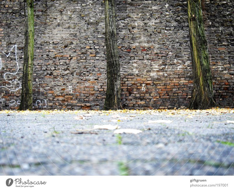 Tree Plant Leaf Wall (building) Stone Wall (barrier) Contentment Graffiti Power 3 Growth Stand Lie Brick Tree trunk Art