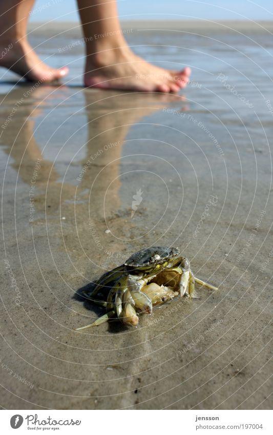 Human being Nature Plant Summer Beach Animal Environment Coast Feet Natural Wet North Sea Discover Barefoot Crawl Shellfish