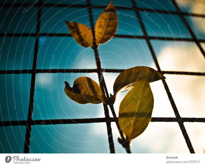 Leaf Karo Environment Nature Plant Earth Air Sky Clouds Sun Sunlight Spring Beautiful weather Park Meadow Scotland Small Town Fence Metal Steel Rust Net