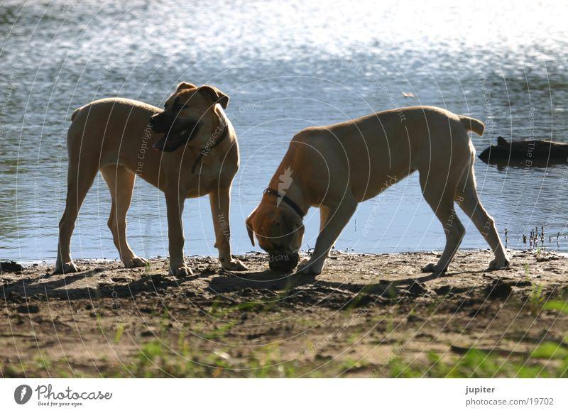 Dog Africa Puppy Namibia