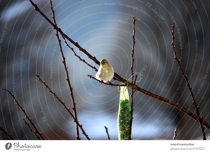 White Tree Green Blue Black Animal Yellow Spring Freedom Happy Contentment Brown Bird Environment Sit
