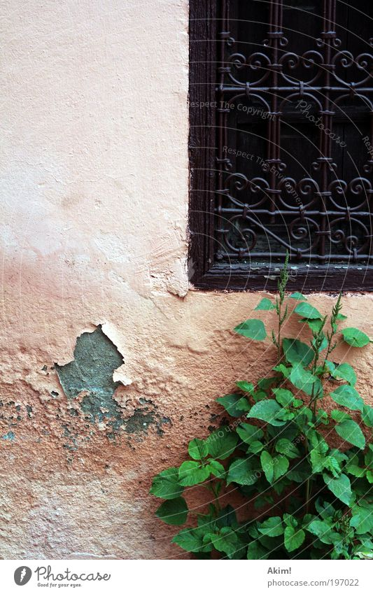 House (Residential Structure) Wall (building) Window Wall (barrier) Flat (apartment) Facade Transience Decline