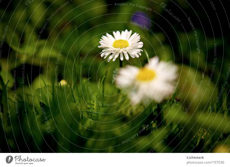 Nature Plant Green White Flower Leaf Environment Yellow Blossom Meadow Grass Natural Moody Growth Fresh Authentic