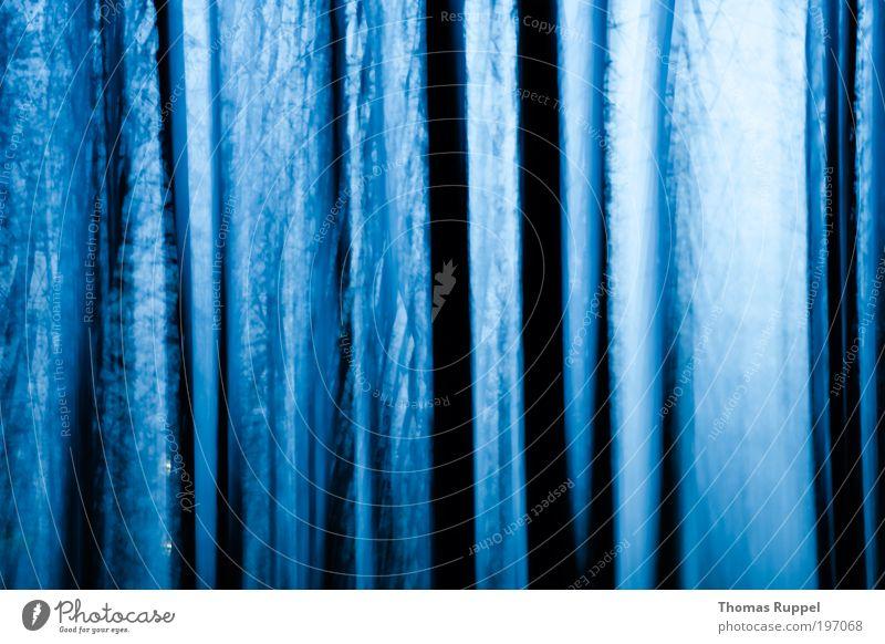 Nature Sky Tree Blue Plant Black Forest Dark Cold Landscape Power Weather Night sky Brave