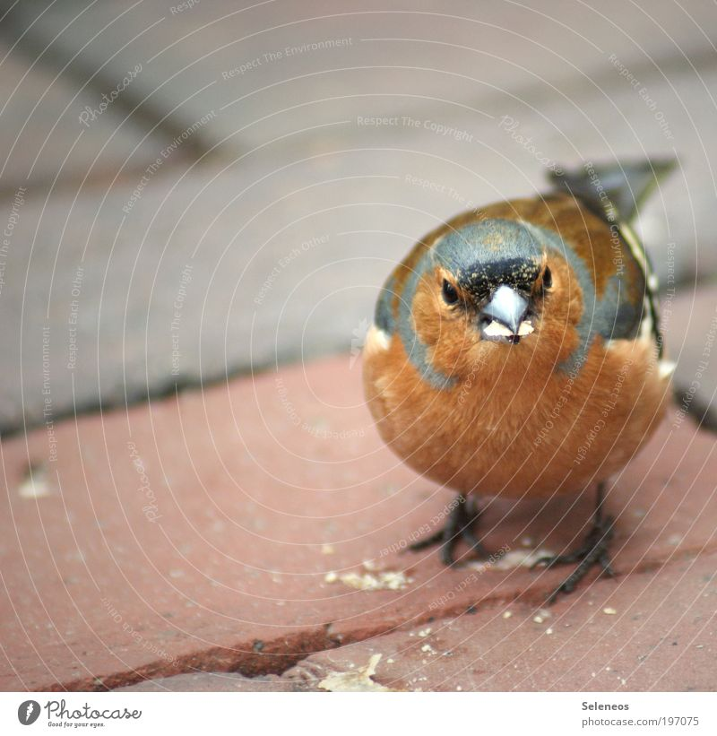 crumb collector Animal Bird Animal face Feeding Small Curiosity Cute Beak Crumbs To feed Colour photo Exterior shot Copy Space left Day Animal portrait