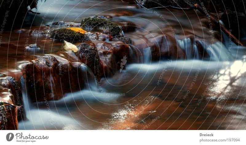 wet barrel II Environment Nature Landscape Elements Earth Water Drops of water Leaf Garden Park Meadow Virgin forest Rock River bank Brook Waterfall Observe