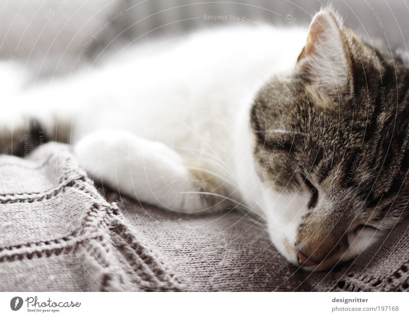 Cat Beautiful Calm Relaxation Warmth Dream Together Flat (apartment) Wild Sleep Soft Pelt Protection Trust Sofa Fatigue
