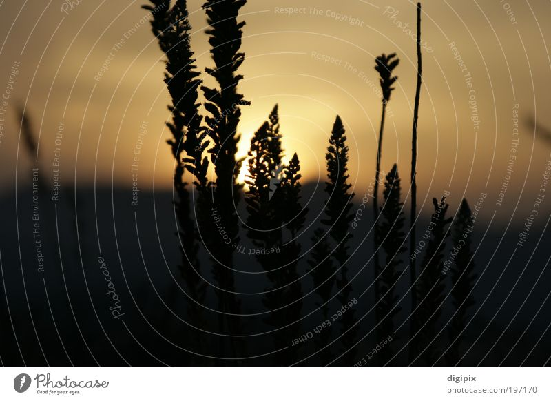 Plant Sun Far-off places Meadow Landscape Grass Earth Gold Beautiful weather Climate