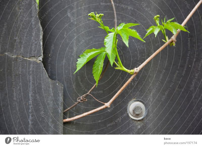 Nature Green Plant Summer Leaf Black Wall (building) Spring Wood Gray Wall (barrier) Brown Metal Environment Concrete Hope