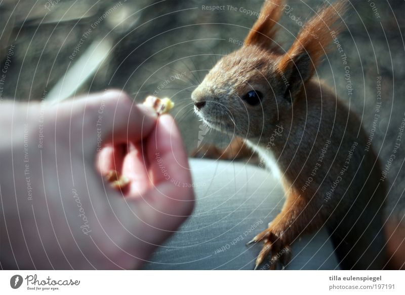 Nature Animal Park Funny Small Environment Joy Climbing Wild Natural Exceptional Curiosity Wild animal Cute Appetite