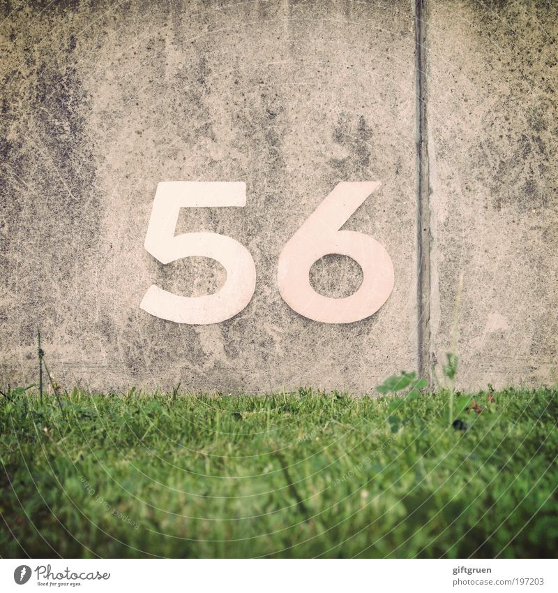 barium Plant Grass Meadow Wall (barrier) Wall (building) Gray Green 56 fifty-six Digits and numbers Arrangement neat Metal accrual system Sequence Jubilee Seam