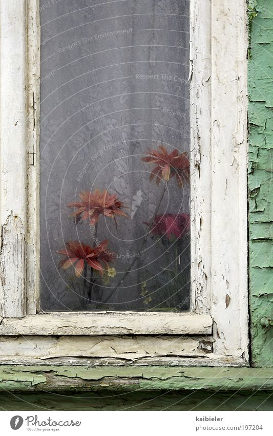 Old Flower Green Red House (Residential Structure) Loneliness Dark Window Blossom Flat (apartment) Gloomy Broken Kitsch Decoration Living or residing Transience