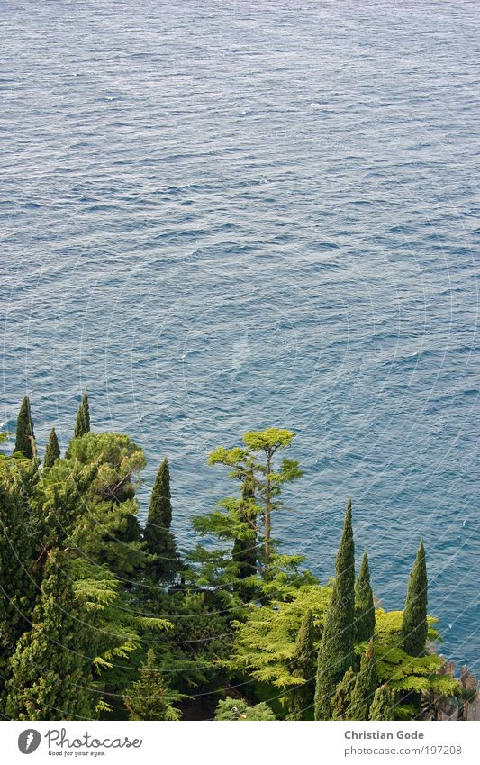 Cypresses and lake Environment Nature Landscape Plant Animal Water Drops of water Summer Grass Bushes Foliage plant Park Hill Rock Mountain Pond Lake Blue Green