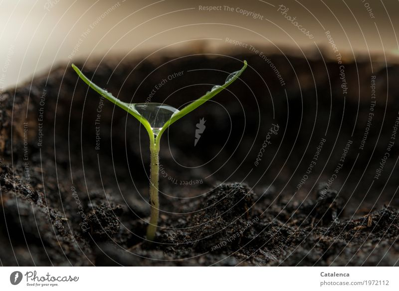 Nature Plant Green Water Small Garden Brown Glittering Growth Beginning Drops of water Future Fluid Anticipation Willpower Shoot