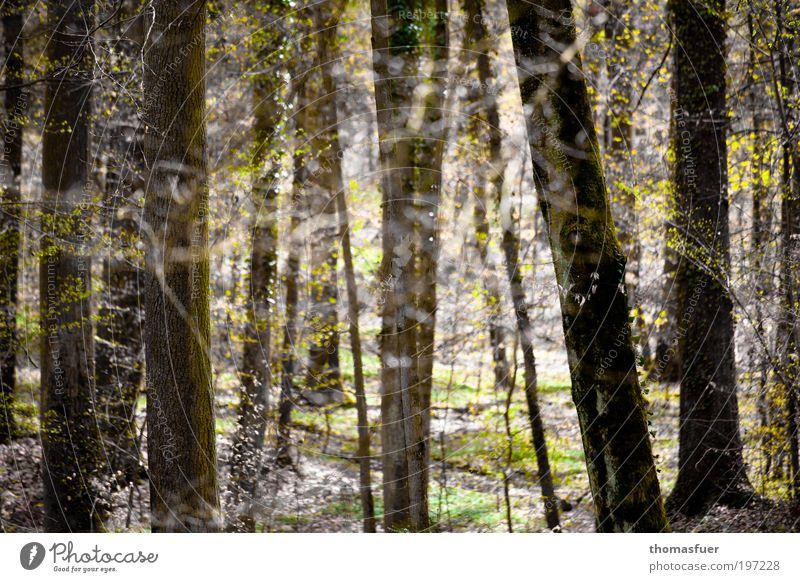 Nature Tree Forest Relaxation Spring Park Landscape Bright Environment Trip Hope Happiness Romance Bushes Leisure and hobbies Joie de vivre (Vitality)