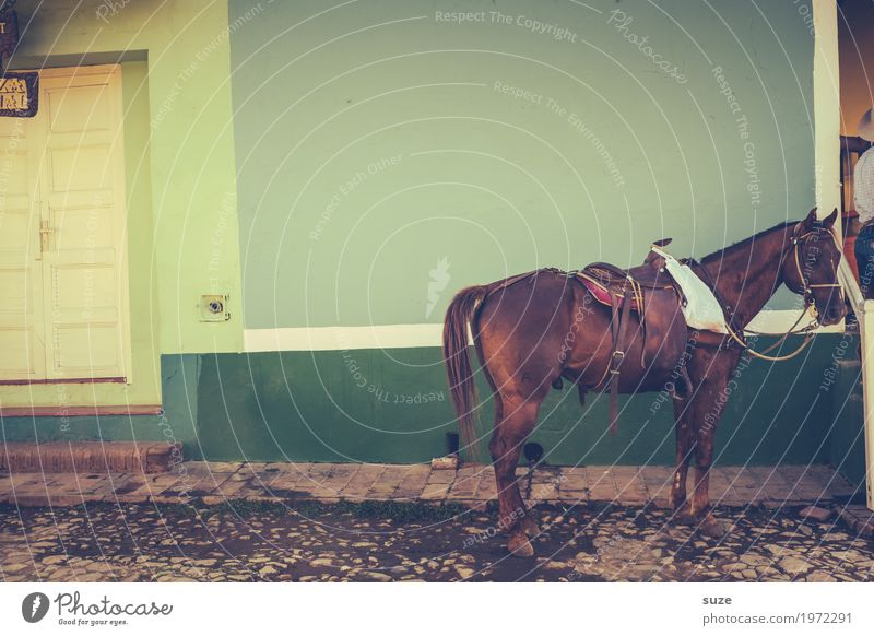 No ten horses Calm City trip Living or residing House (Residential Structure) Culture Outskirts Old town Facade Door Lanes & trails Pet Farm animal Horse 1