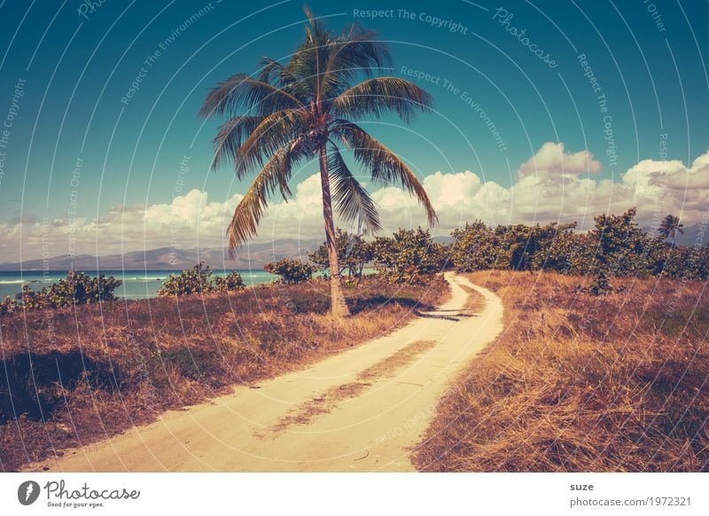 A palm doesn't make a shadow yet Exotic Contentment Calm Vacation & Travel Tourism Summer Summer vacation Ocean Environment Nature Landscape Plant Sky