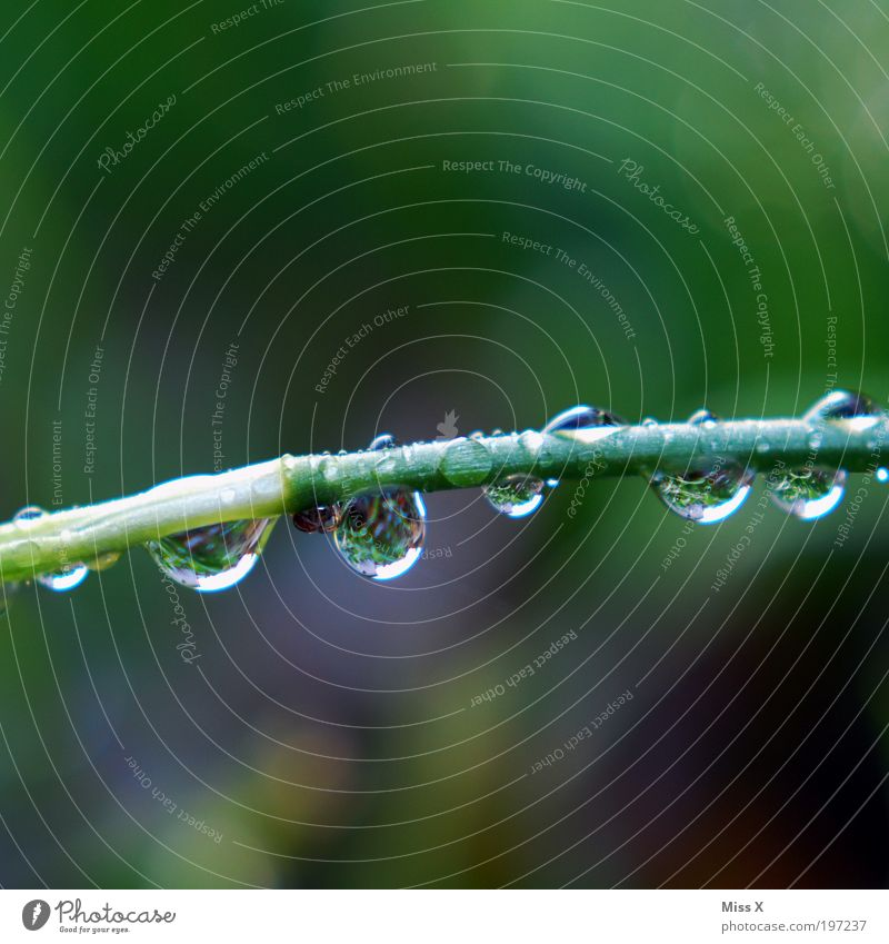 Water Plant Cold Meadow Grass Spring Park Rain Weather Environment Drops of water Wet Fresh Climate Nature Dew