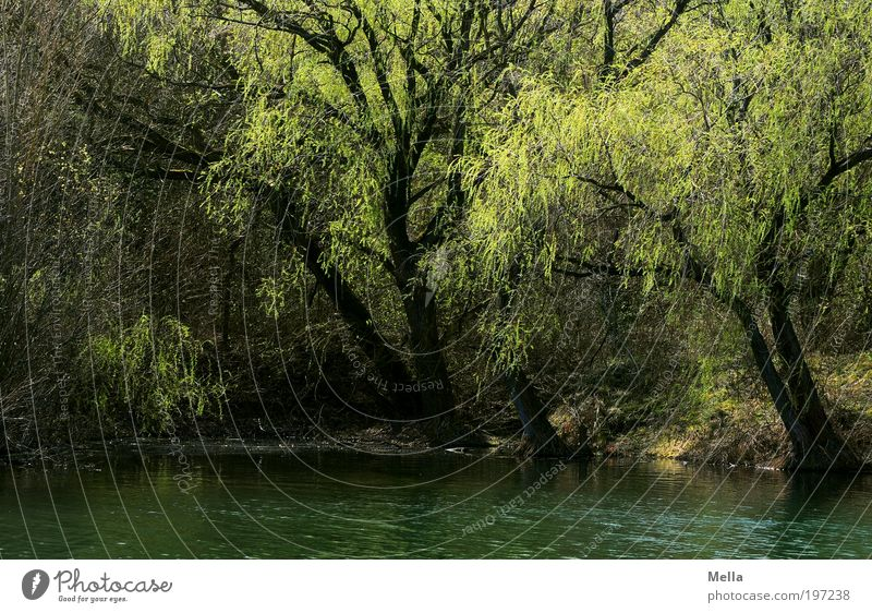 Nature Tree Green Plant Calm Relaxation Spring Lake Park Landscape Moody Environment Growth Break Longing Mysterious