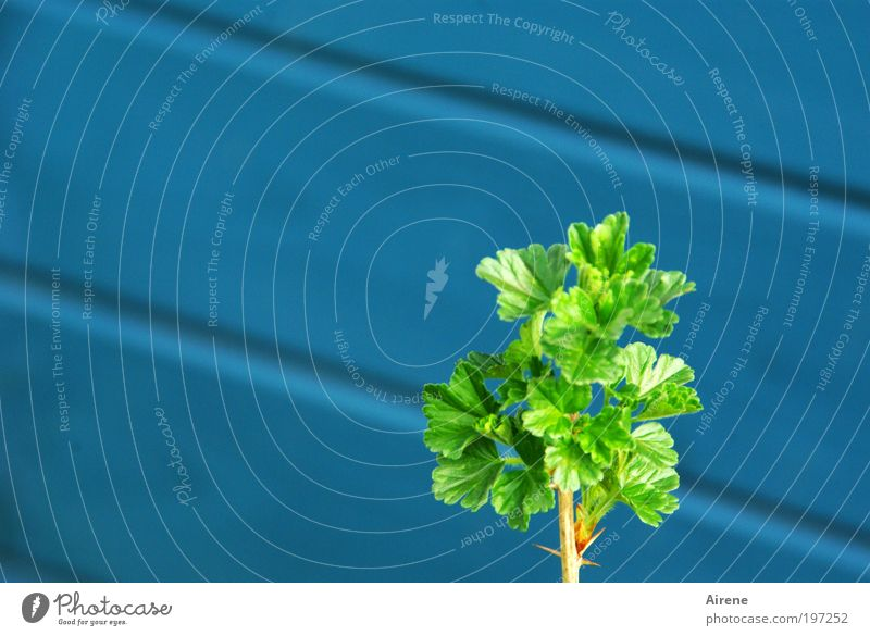 Nature Green Blue Leaf Loneliness Life Spring Garden Contentment Small Success Hope Growth Bushes Delicate Horticulture