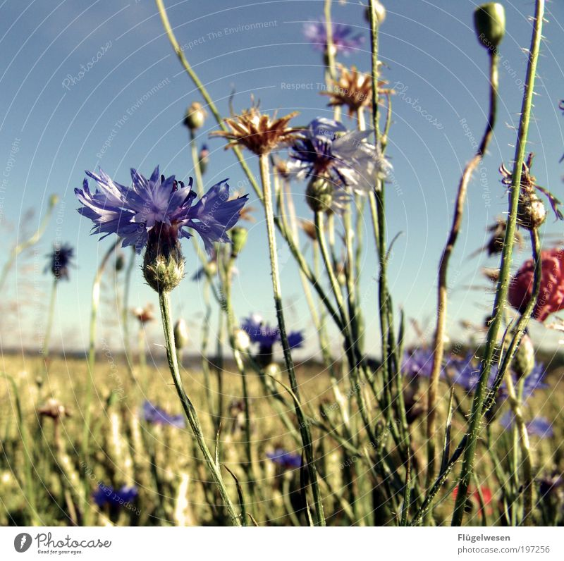 Sky Tree Plant Sun Summer Vacation & Travel Flower Relaxation Grass Field Leisure and hobbies Trip Cornfield Bushes Break Uniqueness