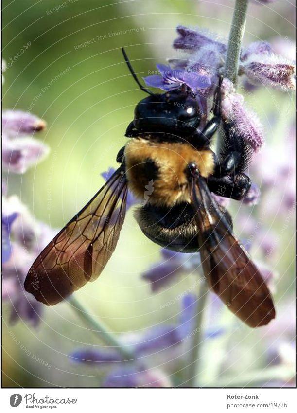 Nature Animal Bee