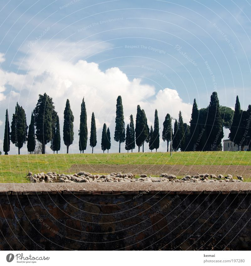 Out of Rome Environment Nature Landscape Plant Animal Earth Sky Clouds Summer Beautiful weather Tree Grass Field Italy Outskirts Wall (barrier) Wall (building)