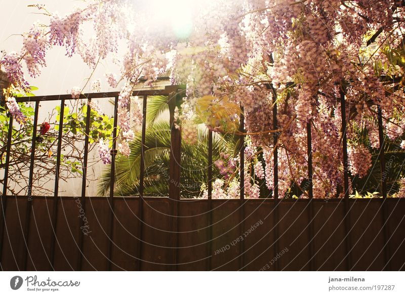 Nature Sun Plant Summer Vacation & Travel Wall (building) Garden Happy Wall (barrier) Park Warmth Contentment Moody Pink Fresh Violet