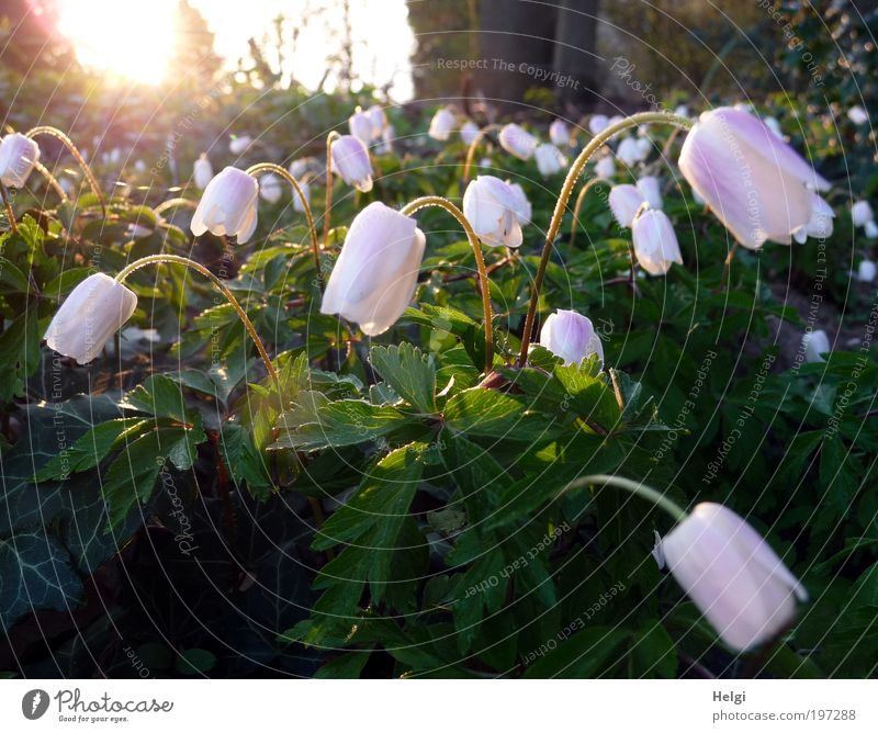 Nature White Green Beautiful Plant Sun Flower Leaf Environment Spring Blossom Weather Glittering Natural Growth Esthetic