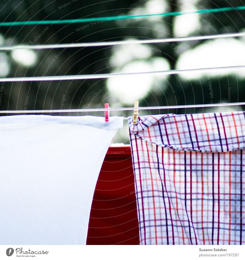 White Red Flat (apartment) Clothing T-shirt Clean To hold on Shirt Pants Hang Washing Checkered Dry Accessory Clothesline