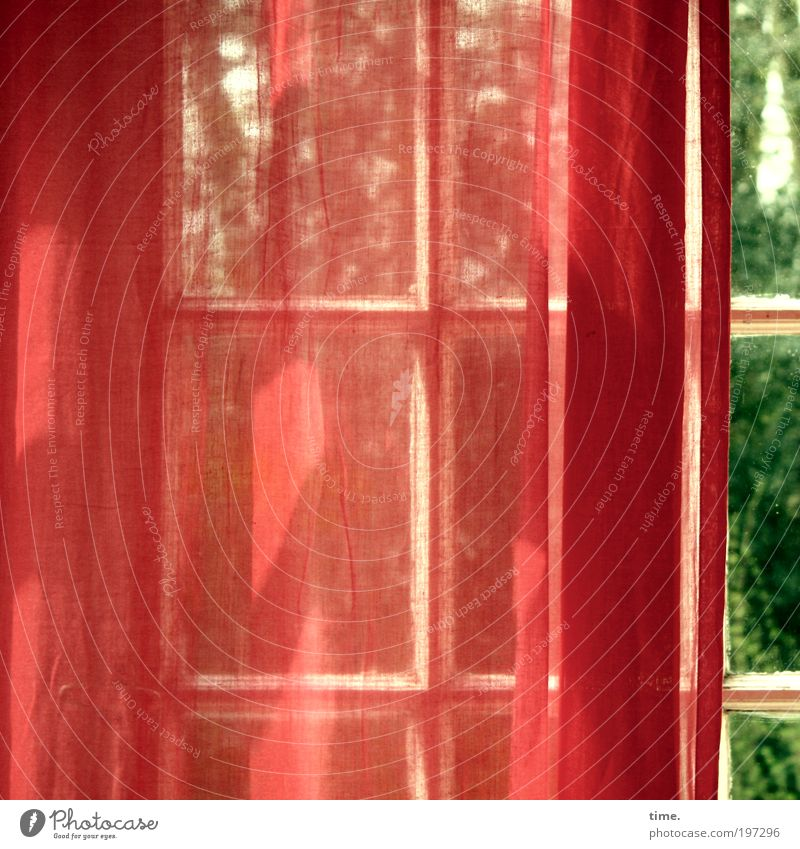 Winter garden in spring Sun Warmth Tree Window Crucifix Green Red Infatuation Mysterious Curtain Drape Textiles Airy glazing bar angle of incidence Delicate