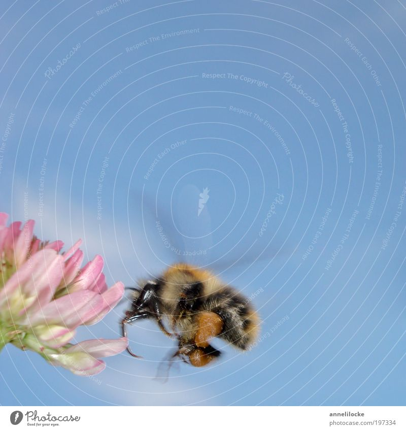 Nature Plant Summer Animal Meadow Blossom Spring Park Field Environment Flying Success Climate Wing Insect Pelt