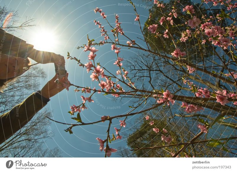 Photographing Spring Human being Woman Photography Take a photo Hand Arm To hold on Camera Blossom Blossoming Blossom leave Pink Red Sky Blue sky Sky blue Sun