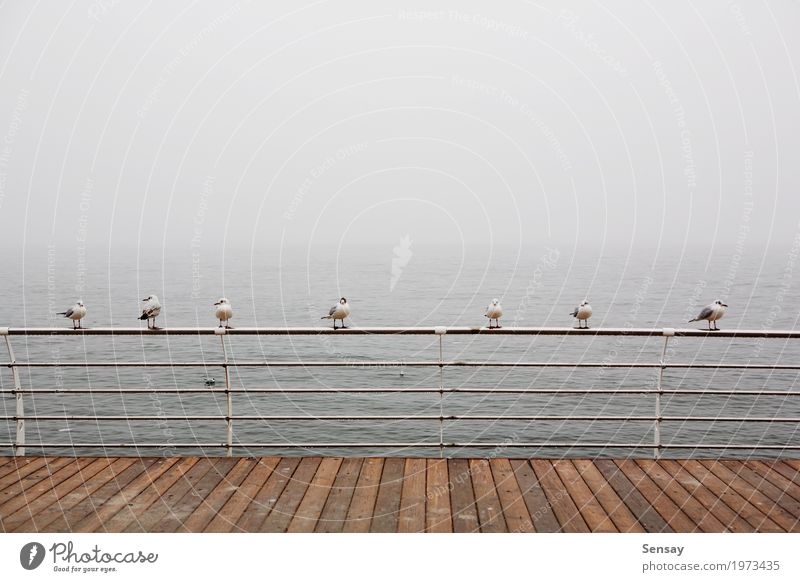 seagulls sitting on the railing in the misty sea Ocean Water Horizon Fog Waves Coast Beach Bay Bird Flying Small Blue Brown Sealife Mute Seagull