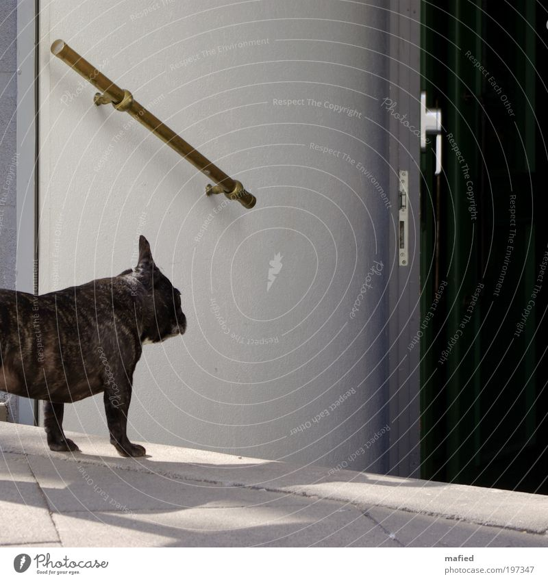 Dog White Animal Black Gray Lanes & trails Small Brown Door Gold Wait Stairs Hope Curiosity Longing Bar