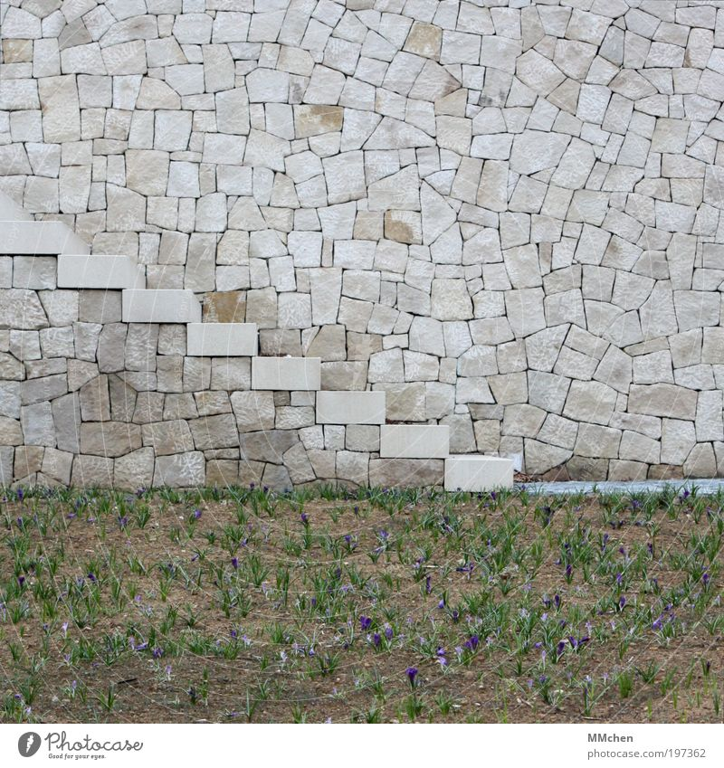 Wall (building) Gray Stone Wall (barrier) Lanes & trails Park Going Stairs Downward Pedestrian Flower Crocus Stony Building Plant Land Feature