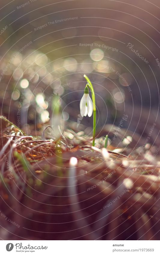 Early flowering! Environment Nature Plant Spring Climate Beautiful weather Flower Blossom Elegant Fresh Cute Spring fever Anticipation Endurance Loneliness