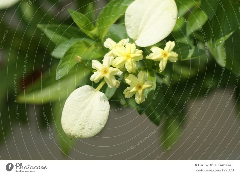 Nature Beautiful White Flower Plant Summer Leaf Far-off places Blossom Spring Park Contentment Bright Moody Elegant Environment