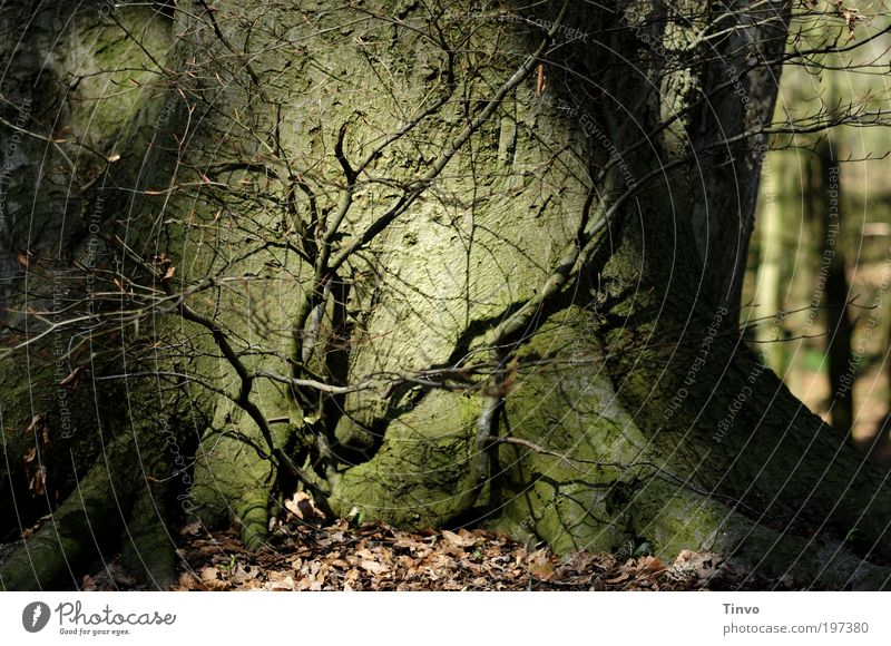 Nature Tree Plant Forest Dark Fear Growth Near Threat Change Protection Mysterious Creepy Tree trunk Attachment Connectedness