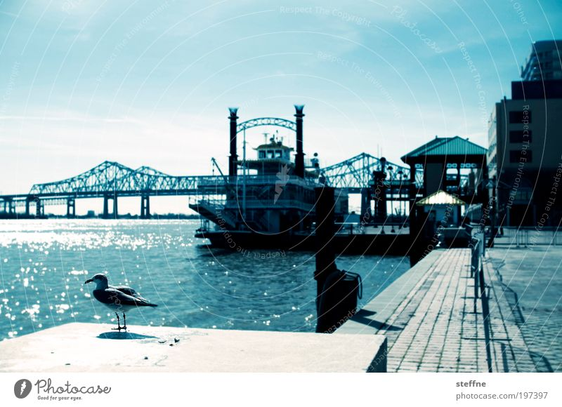 Bridge Louisiana USA River Historic Beautiful weather Seagull Watercraft River bank Bird Cross processing Mississippi New Orleans Paddle steamer