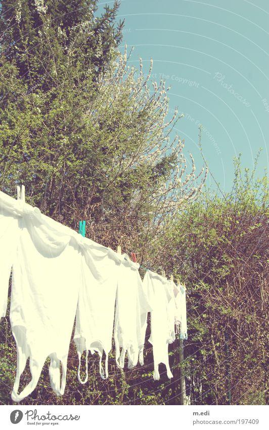 Nature Tree Plant Garden Warmth Bright Environment Wet T-shirt Shirt Underwear Clothesline Undershirt