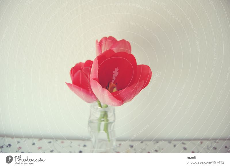 Flower Plant Red Table Decoration Tulip Vase Flower vase