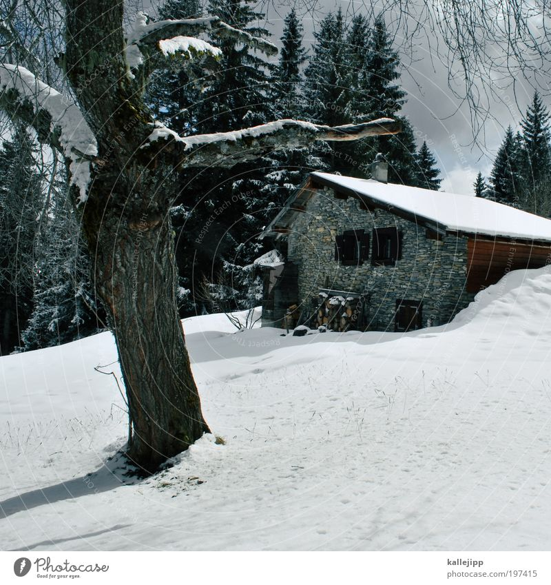 Nature Tree Loneliness Calm House (Residential Structure) Winter Window Mountain Environment Lanes & trails Snow Style Lifestyle Flat (apartment) Living or residing Door