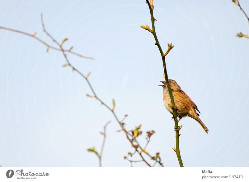 Nature Sky Blue Plant Animal Life Emotions Spring Freedom Bird Small Environment Sit Bushes Joie de vivre (Vitality)
