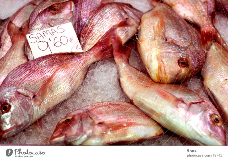 Samas Fish Fishery Markets Fish eyes Scales Dorade Odor Fin Tails Fidget Ice Transport salted Frozen Malodorous Fish market Many Red Death Price tag