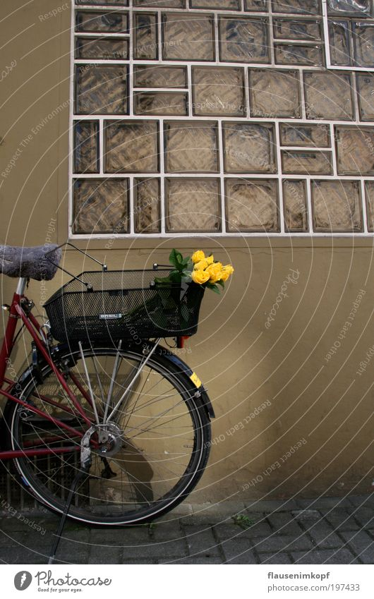 Summer Flower Window Wall (building) Wall (barrier) Bicycle Fragrance