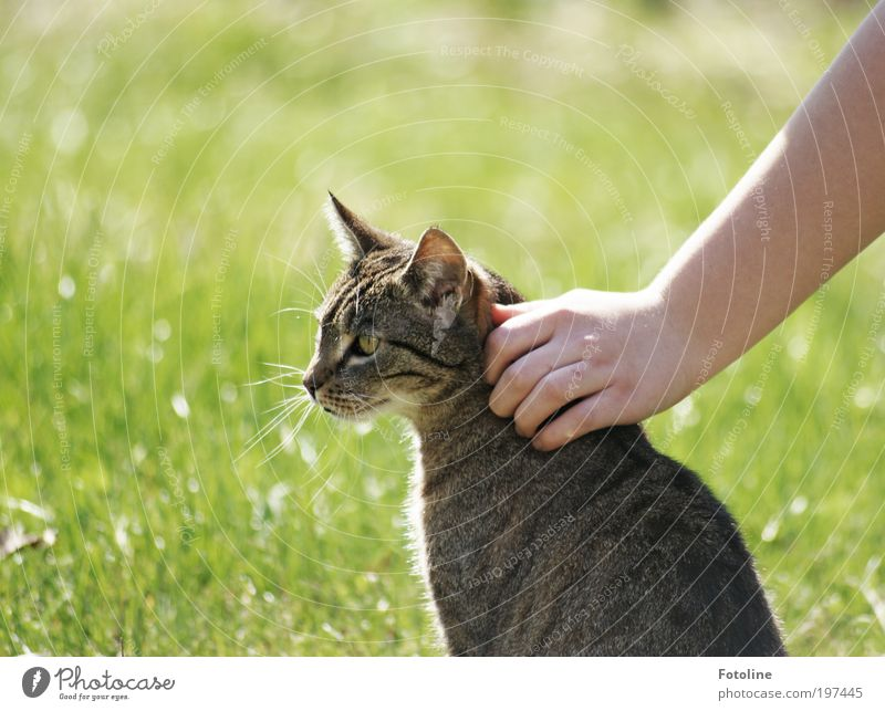 stroke Human being Hand Fingers Environment Nature Animal Elements Earth Spring Summer Climate Weather Beautiful weather Garden Meadow Pet Cat Animal face Pelt